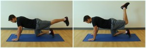quadruped hamstring curl exercise